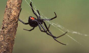 Ngủ mơ thấy nhện nên đánh con gì để phát tài?