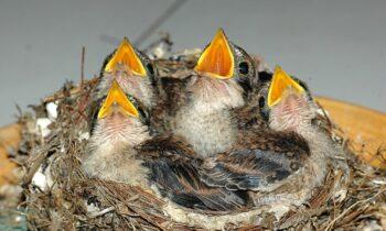 Nằm mơ thấy tổ chim đánh con gì đánh số mấy